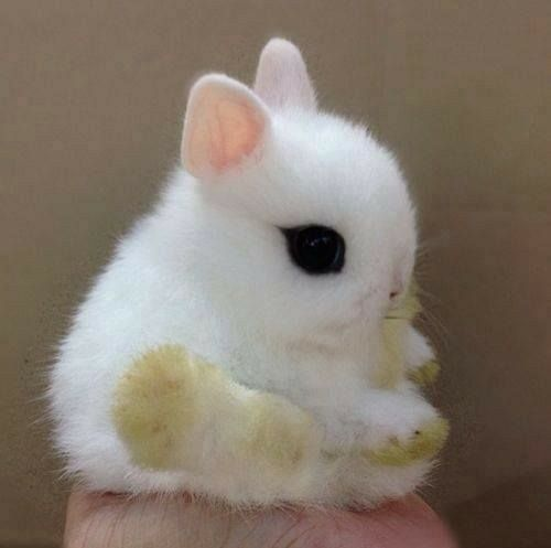 A tiny little bunny! With a ring tied around it's neck