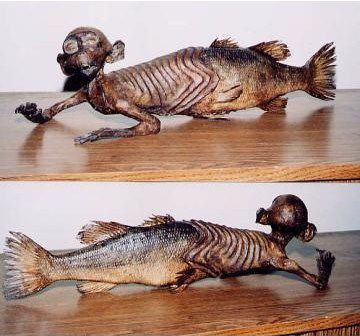 Mythical Creatures Fiji Mermaid Wattpad