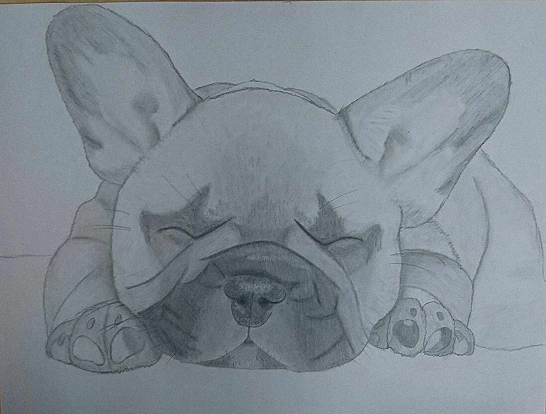 Meine Zeichnungen Französische Bulldogge Wattpad