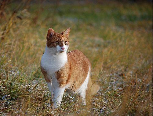 Have this cat: