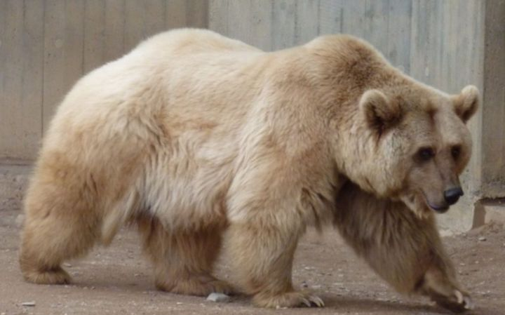 I chose this animal because I wanted to go for a woodsy yet Northern vibe with Yukon