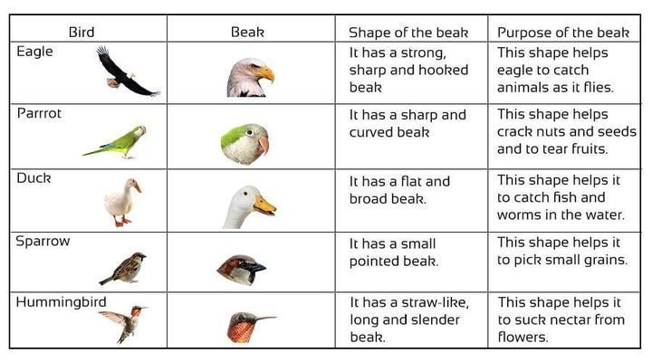 class 3 science online notes and worksheets cbse class 3 science birds and their features. Black Bedroom Furniture Sets. Home Design Ideas