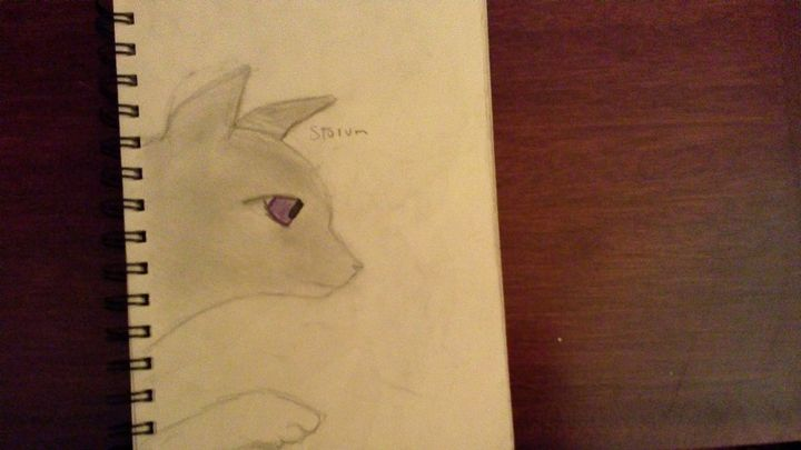 This was the one I drew of Strom which is a cat me and @Emberpelt made up (Basically it's one of Emberpelt in something we were writing) But I just wanted to try contrasting the eye with the fur so it's just basic, no shading