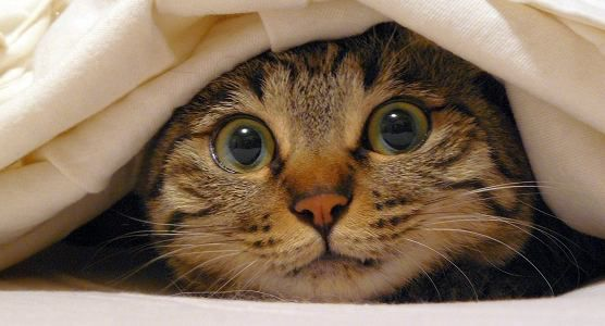 Le commentaire de Raoul : Passionnant ! Jay est flippant, j'en ai presque fait pipi dans ma litière !
