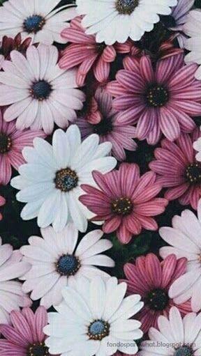 Fondos Y Frases Tumblr Fondos Con Flores Wattpad