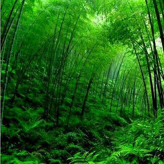 """Do you see the fern and the bamboo?"""