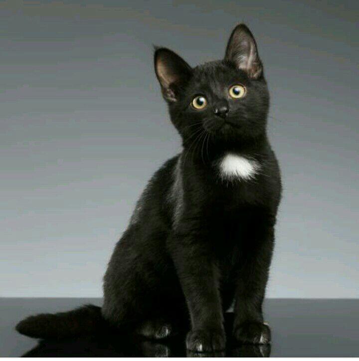 chatte noire léché chaud espagnol sexe de l'adolescence