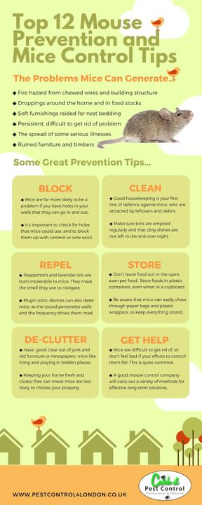 CATCH-PEST CONTROL LTD - Mice Prevention Infographic Guide