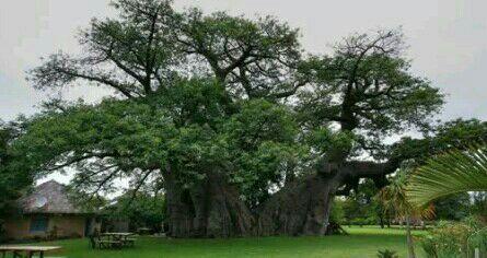 Dengan lesu aku menyandarkan tubuhku di bawah pohon tersebut