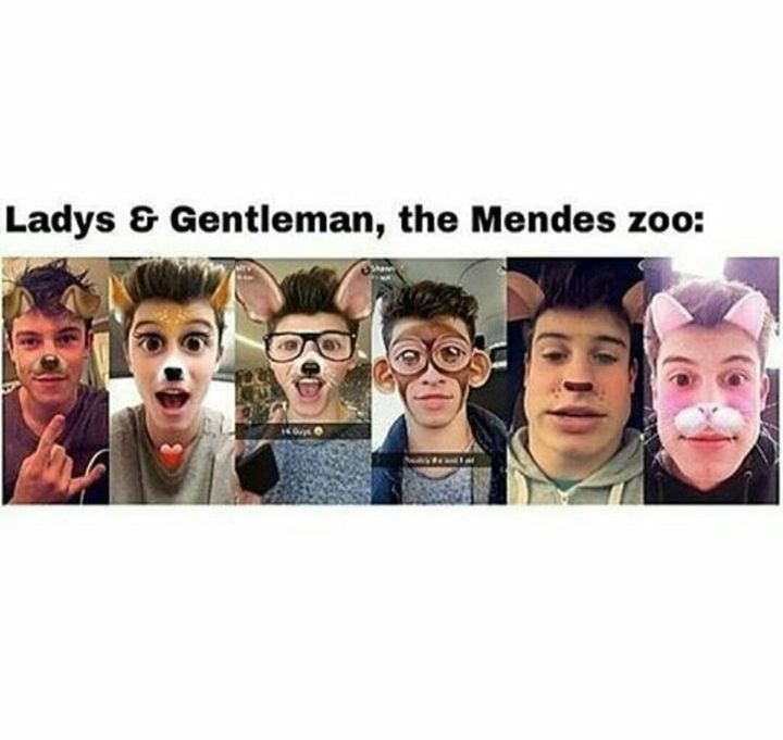 I never found zoo's interesting but NOW I LOVE THEM! I'm about to request this zoo for every school trip, in every school I'm in, in every grade, and when I'm not in school? IMMA TAKE MY DAMN SELF BECAUSE I WANT TO SEE SHAWN, DON'T JUDGE ME!