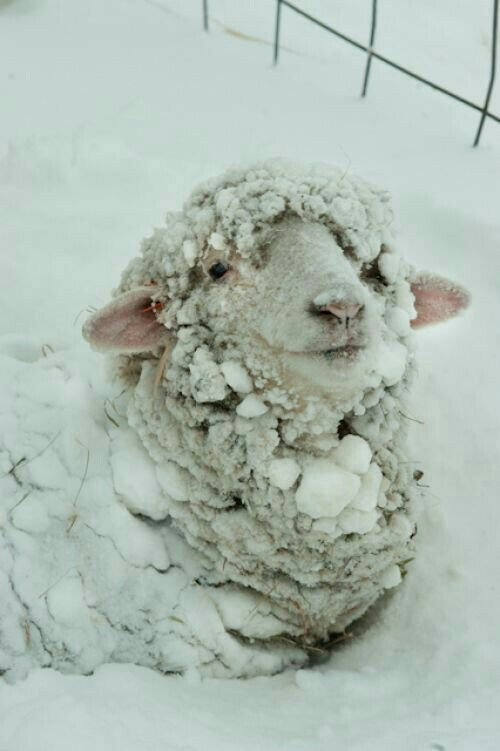 Yet looking like a lamb, innocent with your undyed, pure pearly complexion and all!!!
