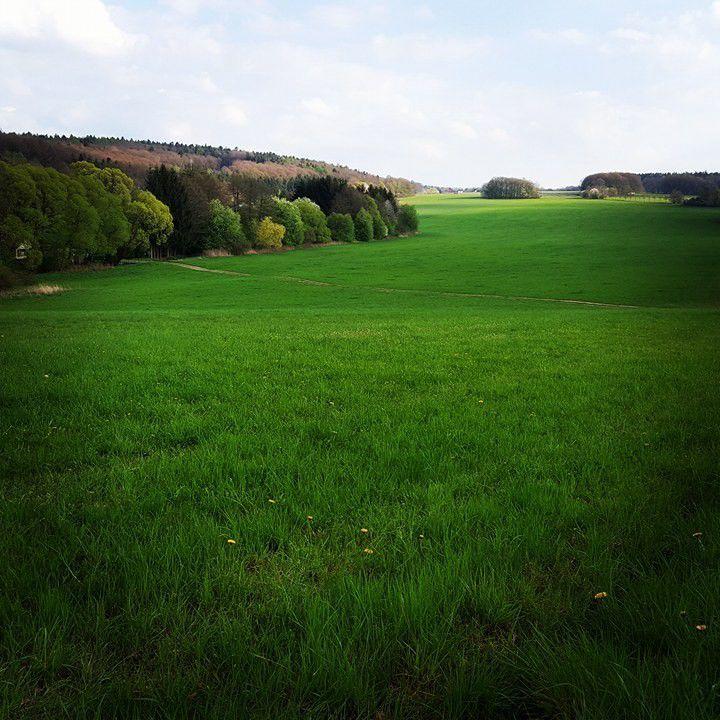 """Pranostika na dnešní den praví: """"Na svatého Tiburcia má se všechno zelenat!"""" A taky že se zelená! ZELENÝ ČTVRTEK byl sice včera, ale dnes příroda ukázala svoje kouzlo"""