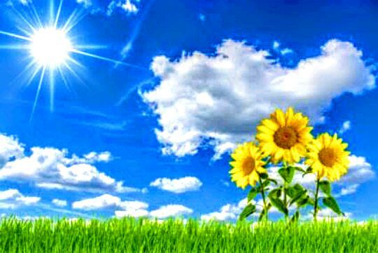 Bunga Matahari Vs Matahari Bunga Matahari Vs Matahari Wattpad