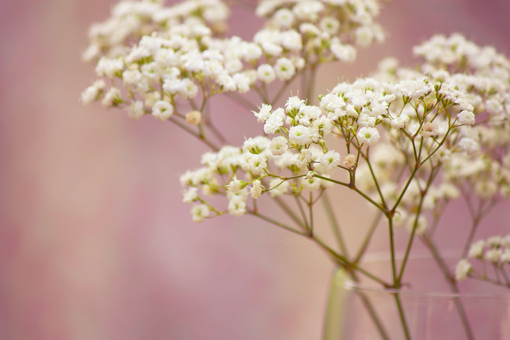 Floral Haiku Babys Breath Wattpad