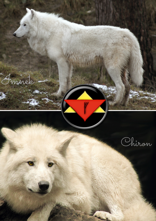 Alpha Second of Watcher Gediel's pack, mother of Argus, and mate of Chiron; Arctic wolf soul