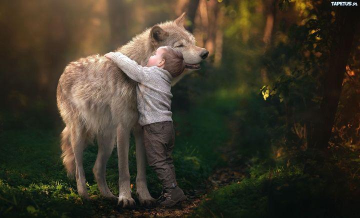 Noszenie wilczych skór, kłów lub pazurów chroniło od złego i obdarowywało noszącego cechami tego zwierzęcia, nie chodzi tu o to że stawał się wilkiem lecz np