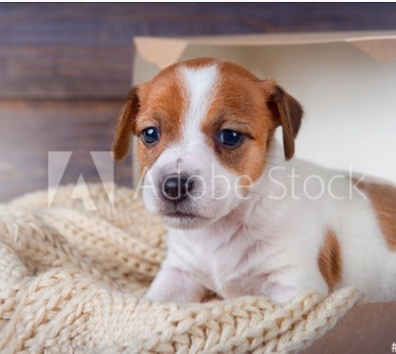 A little puppy in the box with a tiny cuddly blanket I took him in my hands and You: welcome to the family Payton: what do you want to name it?You:is it a boy or girl Payton: I think you meant a man in the house He barked and we all laughed Kate w...