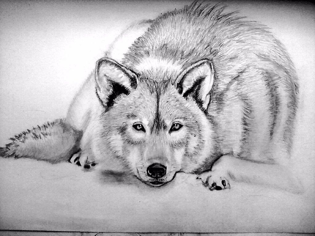 Рисунки животных волков карандашом кинг