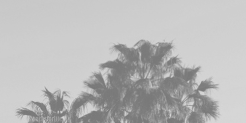 palm trees tumblr header palm trees tumblr header black and white63 and