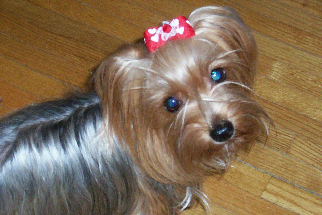 Pictures Of Jojo Siwa Dog