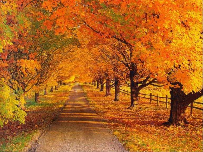 Парк як завжди був красивий, особливо, коли осінь, зараз жовтень і правда цей місяць описує цю красоту, зараз всі листя жовті, можна сказати золота осінь