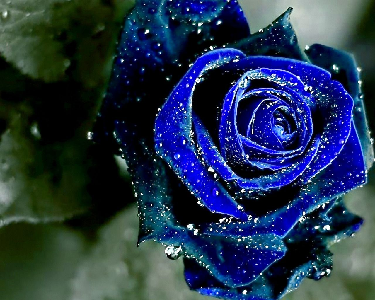 Blue Pretty Flowers The Most Beautiful Flower 2018