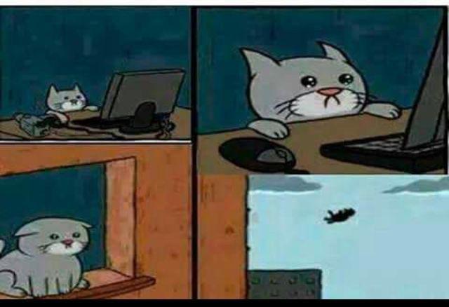 Plantillas Para Memes O Momos Un Gatito Sad Wattpad