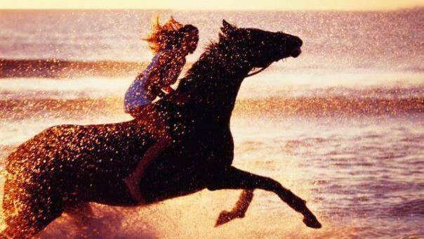 Frases De Amor A Cavalos Tumblr Frases E Mensagens Em