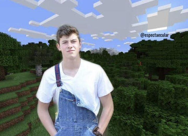 shawn loves playing minecraft