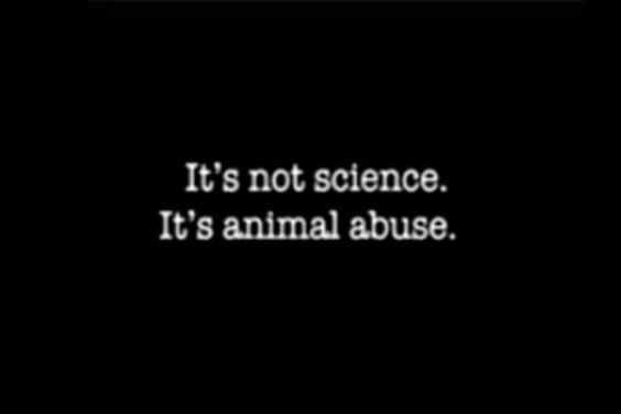 Millions of Animals Suffer and Die in Testing, Training, and Other Experiments MATURE WARNING FOR CHILDREN!