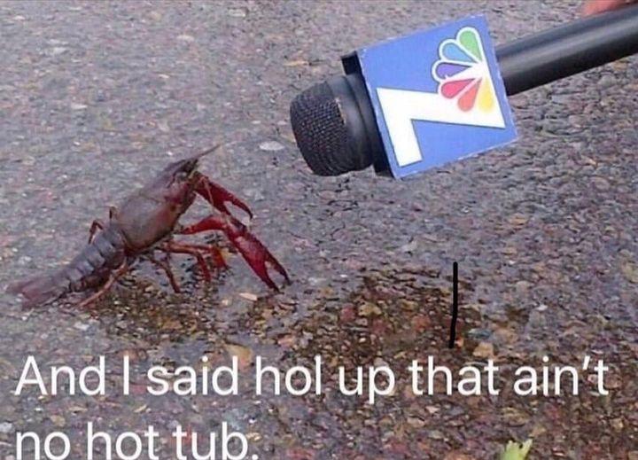 Bitch😭💀 meeee as a scorpion