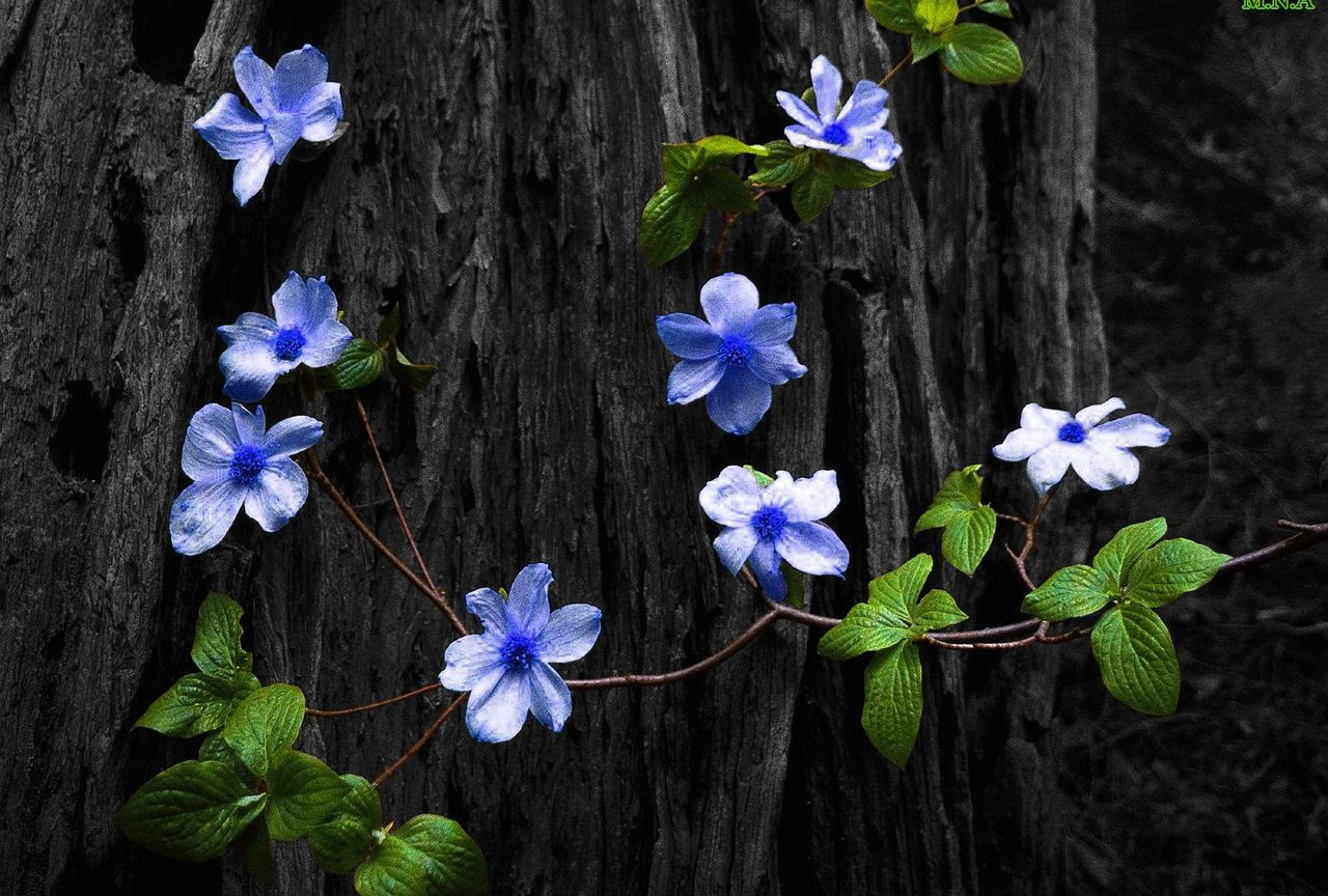 Kamala then saw bright blossoming blue flowers on a tree top and felt, it could be well suited for Mahadev Pooja