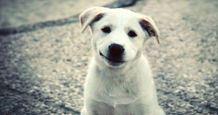 El perro era muy blanco y bonitoEnid: Bueno, pues creo que firulais tiene hambreCarl: Llamemos a Magaly para que nos ayude a buscar comida para firulais Carl y Enid van al cuarto de MagalyCarl: No puede serEnid: Carl mátala Carl saco la pistola y ...