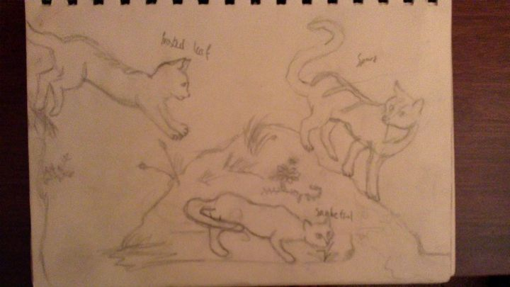 Just me and my siblings rp characters we use sometimes, the drawings pretty basic (I was pleased with it at the time) It's again drawn just from memory and I drew the ground to the cats, not the cat's on the ground so the posture of some are random