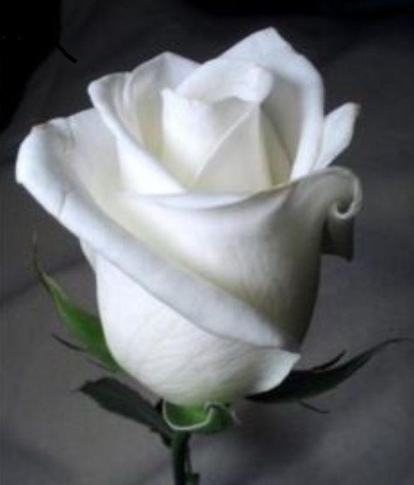 """[Un mes después]""""Jungkook con su vestimenta negra y un ramo de rosas blancas las cuales eran tus favoritas, el estaba en aquel lugar que no le gustaba para nada pero solo fue porque quería estar contigo y hablar"""