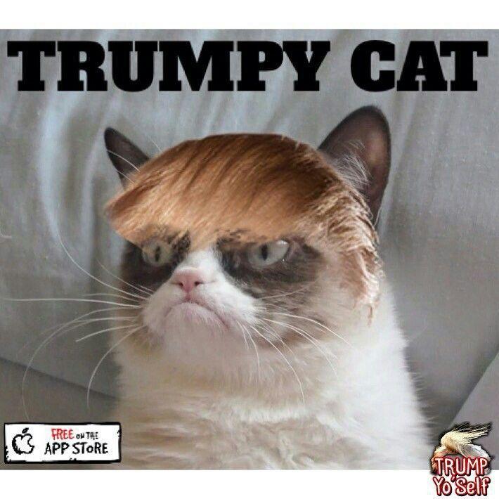 Grumpy Cat Trump Wattpad