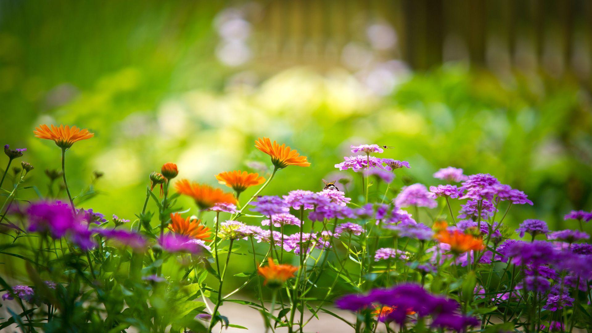 """Ne kadar güzel bir bahçeniz var?"""" dedi Melis"""