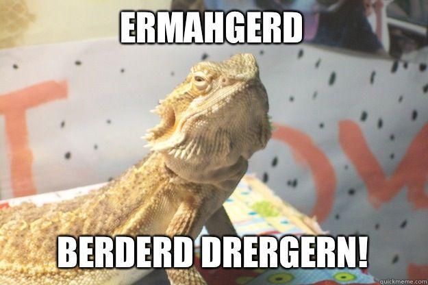 Beardie Memes 6 Wattpad