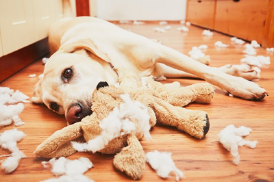 Chewing or tearing things up can also be a way to liberate pent-up energy or stress