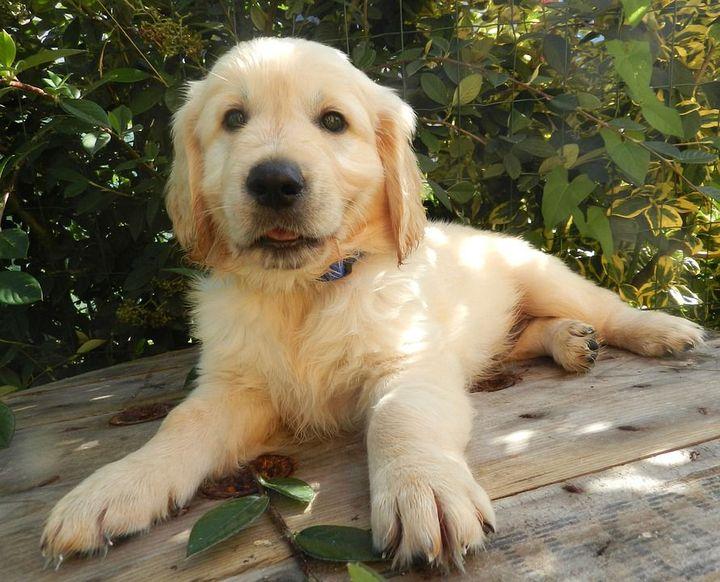 1,345,657 likes 1,345 commentsY/U/N: Meet my puppy Duke that David got me, Thanks bby ❤️😍💫
