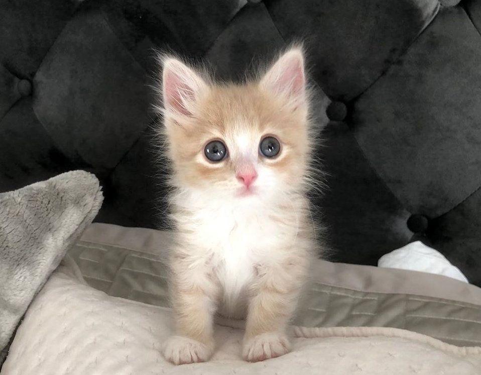 GingerSnapUrNeck: BABY!