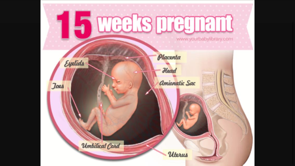 17 неделя беременности как расположен плод фото