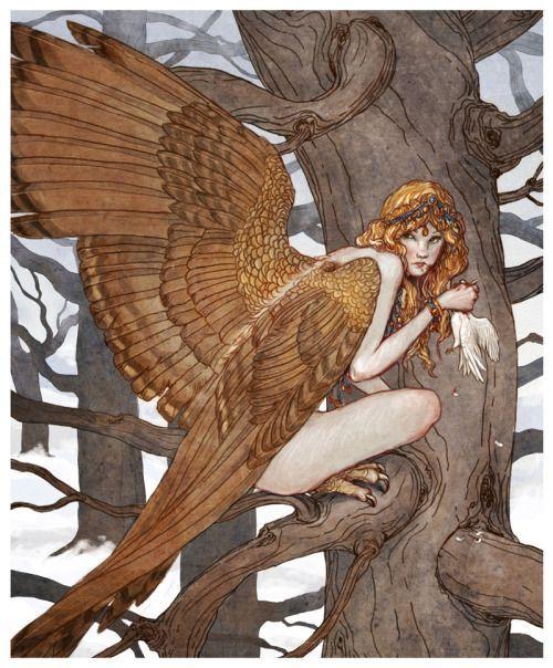 Por su parte, el Destino quería que ellas murieran a manos de los hijos de Bóreas (el Viento Norte), quienes iban con los Argonautas, y si no las alcanzaban, los que debían morir eran ellos