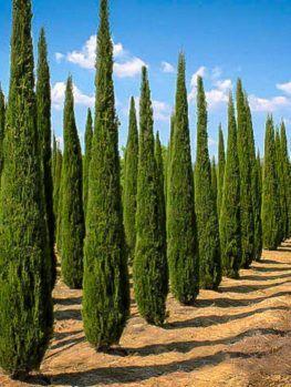 Cypress: January 25-31