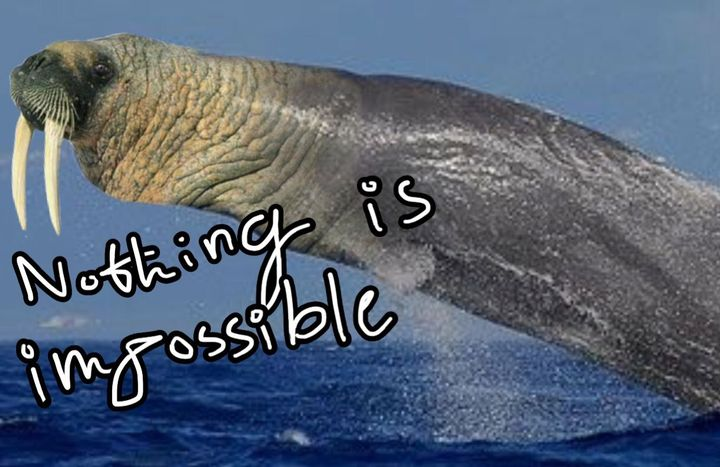 The Sealuga and the Whalerus