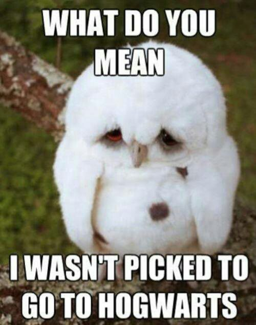 Harry Potter Memes Sad Owl Wattpad