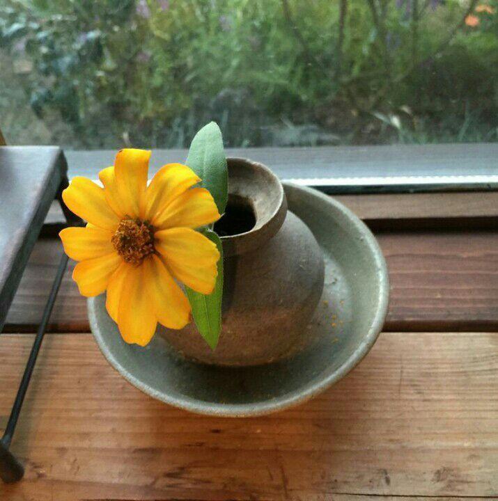Đây là hoa cúc Zinnia và Ý nghĩa của hoa Zinnia sâu hơn hầu hết các bông hoa nở vào giữa mùa hè, nó tượng trưng chomột biểu tượng của tình yêu, sự tốt lành và suy nghĩ về một người bạn xa vắng, cũng như sự kiên định và sự ghi nhớ hàng ngày của n...