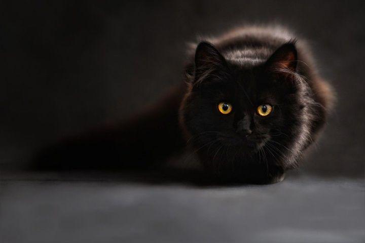 Pomimo swej demonicznej, złowieszczej natury, koty były cenionymi członkami domostw u naszych przodków, nie tylko ze względu na ochronę przed gryzoniami