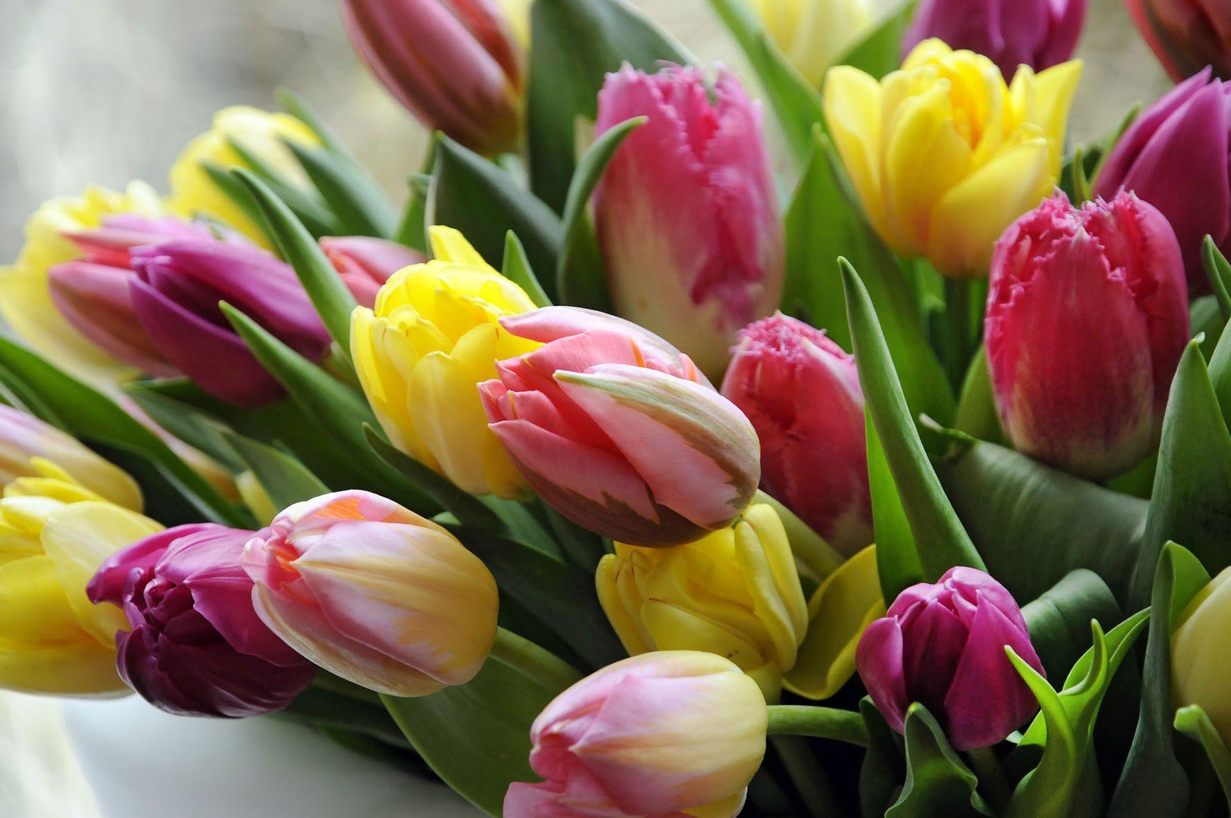 Открытки с тюльпанами фото 8 марта, доброй субботы хорошего