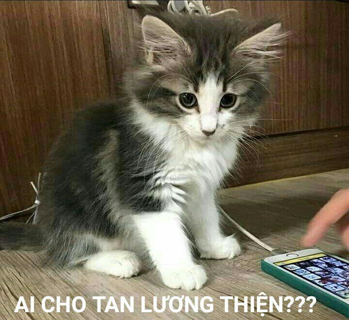 Thế còn bé Tan của anh Thạc thì sao? Đừng để bé bơ vơ cô đơn lạc lõng giữa dòng đời lầy lội này chứ =)))) bé là truyền nhân là Kim Tan phiên bản mèo quý tộc đấy, không đùa được đâu =)))))